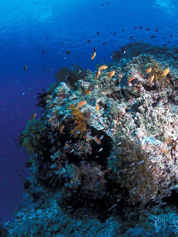 Большой барьерный риф на карте