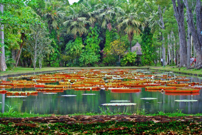 ботанический сад маврикий