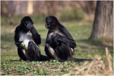 Пражский зоопарк | Отзывы посетителей