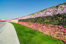 Дубайский Чудо парк Dubai Miracle Garden