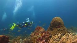 Остров Аруба Карибского моря