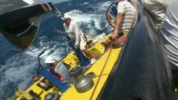 Регата Карибского моря 2010
