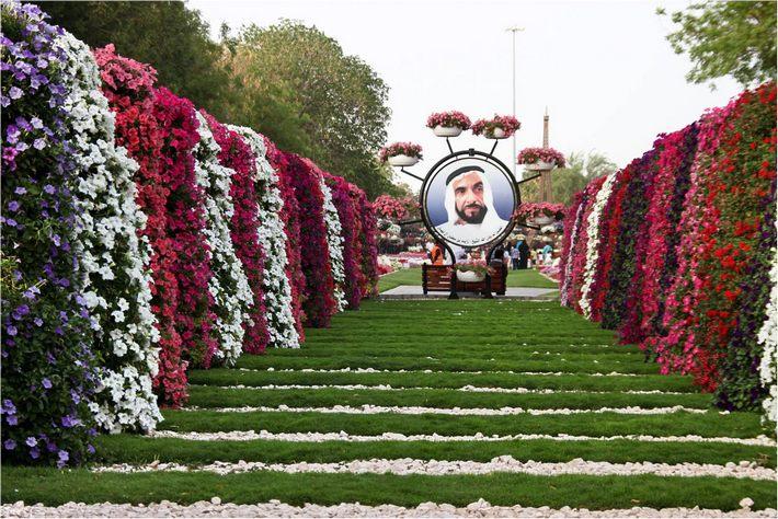Парк цветов открыт в ОАЭ
